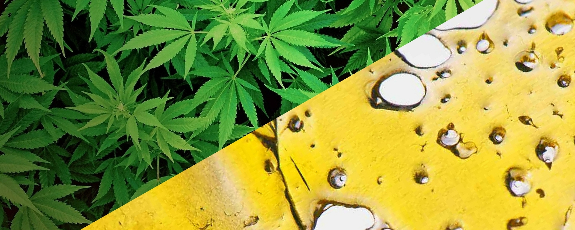 Ask a Cannababe: Flower vs Concentrates - HeyHelloHigh