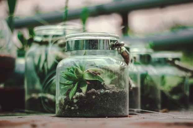clear glass terrarium