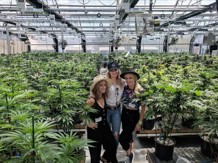 800px-My_420_Tours_Cannabis_Greenhouse_heyhellohigh